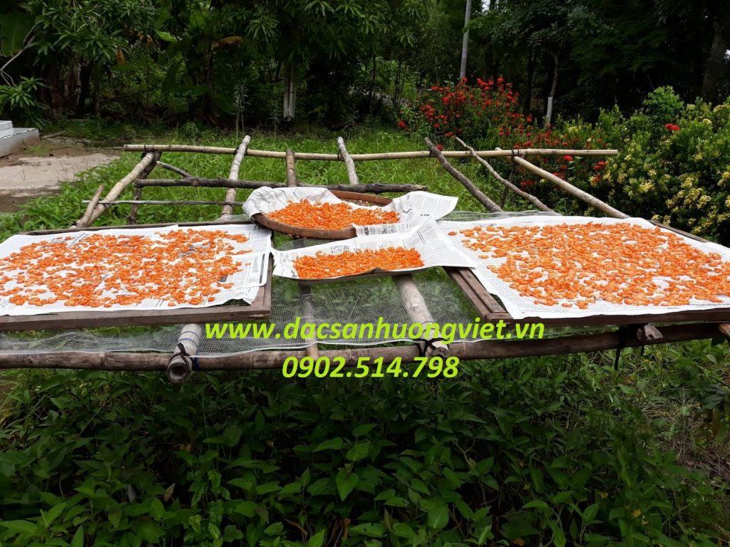 Phơi tôm khô Cà Mau